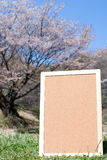 Cork board in nature Stock Photos