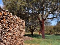 Cork bomen in zuidelijk Europa Royalty-vrije Stock Afbeelding