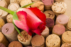 Cork from bottles with rose Royalty Free Stock Photography