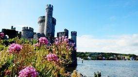 Cork Castle i kork, Irland arkivfoto