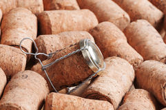 Cork from champagne. A lot of corks from champagne Royalty Free Stock Photos