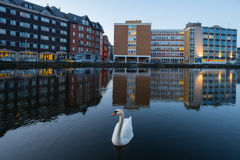 Cork city Swan Stock Photos