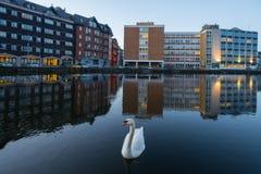 Cork city Swan Stock Photos