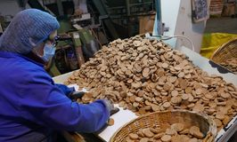 Cork factory in Sao Bras de Alportel, Algarve, Portugal, March 14, 2018. Processing of cork boards and manual quality control. Unidentified persons royalty free stock photos