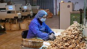 Cork factory in Sao Bras de Alportel, Algarve, Portugal, March 14, 2018. Processing of cork boards and manual quality control. Unidentified persons stock photography