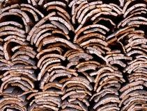 Cork oak bark in Portugal royalty free stock image