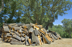 Cork oaks Stock Photography