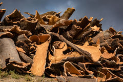 Cork Pile Immagine Stock