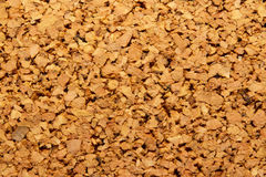 Cork tree Stock Image