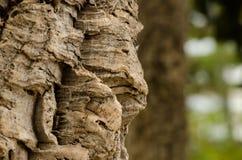 Cork Tree. Bark of a Cork Tree Stock Photos