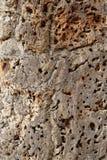 Cork tree skin Stock Image