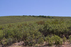 Cork trees forest Stock Image