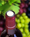 Cork of wine bottle. Image of wine bottle with cork on grapes background, luxury alcoholic grape beverage, selective focus  of different vine kinds, restaurant Royalty Free Stock Image