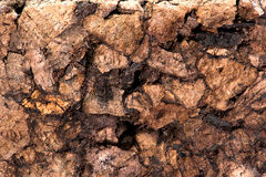 Corkboard as close-up Royalty Free Stock Image