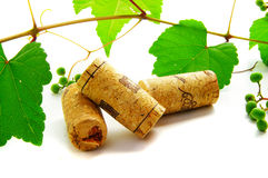 Corks and vine Royalty Free Stock Image