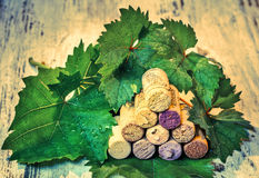 Corks wine with grape leaves Stock Image