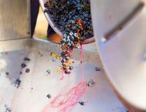 Corkscrew crusher destemmer winemaking with grapes. Corkscrew crusher destemmer in winemaking with cabernet sauvignon grapes Stock Image