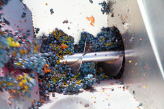 Corkscrew crusher destemmer winemaking with grapes Royalty Free Stock Photography