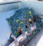 Corkscrew crusher destemmer winemaking with grapes Stock Photo
