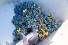 Corkscrew crusher destemmer winemaking with grapes Stock Photography