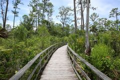 Free Corkscrew Swamp Sanctuary Stock Photo - 124018600