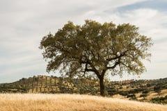 corktree krajobrazowi Portugal południe Obrazy Stock