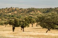corktree krajobrazowi Portugal południe Fotografia Royalty Free