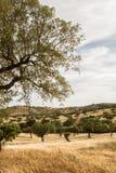 corktree krajobrazowi Portugal południe Zdjęcia Royalty Free