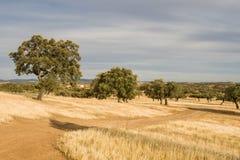 corktree krajobrazowi Portugal południe Zdjęcie Stock
