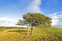 Corktree in Portugal. Corktree in the countryside from Portugal Royalty Free Stock Photography