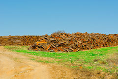 Corkwood Stockbild