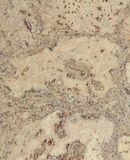 Corkwood background. Surface of a corkwood tile closeup texture Stock Images