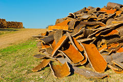 Corkwood Stock Images