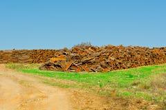 Corkwood Stock Image