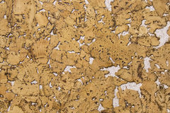 Corkwood texture mixed with white plaster Stock Photos