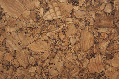 Corkwood texture royalty free stock images
