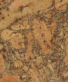 Corkwoodbakgrund Royaltyfri Bild