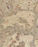 Corkwoodbakgrund Arkivbilder
