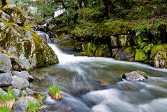 Corlieu Falls along the Lewis Creek National Recreation Stock Photo