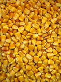 Corm Stock Photography