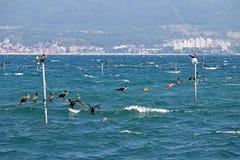 Cormorán el Mar Negro Nessebar Imágenes de archivo libres de regalías