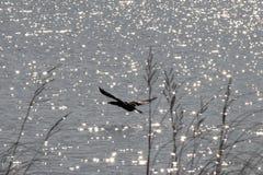 Cormorão e lago sparkling fotografia de stock royalty free