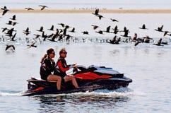 Cormorão preto pequeno - pássaros de água imagens de stock royalty free