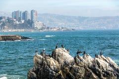 Cormorões e gaivota de mar Imagem de Stock Royalty Free