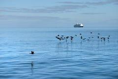 Cormorões e navio de cruzeiros do cabo Fotografia de Stock Royalty Free