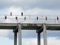 Cormoranes alineados en un embarcadero Fotografía de archivo