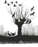 Cormoranes en el río Fotografía de archivo