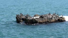 Cormoranes en la isla en el mar almacen de video