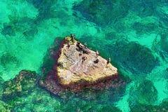 Cormoranes en la roca Imagen de archivo libre de regalías