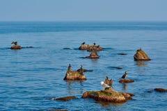 Cormoranes en las rocas Imagen de archivo libre de regalías